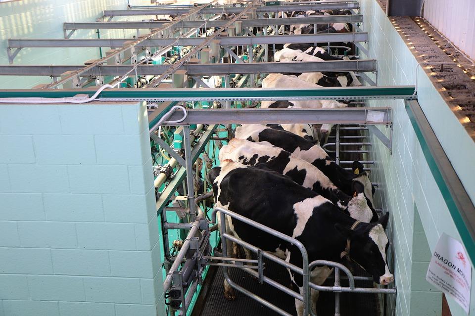 dairy_barn_solution